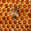 Yellow beautiful honeycomb with honey and bee, background -  