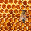 Stock Photo: Yellow beautiful honeycomb with honey and bee, background