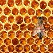 Yellow beautiful honeycomb with honey and bee, background — Stock Photo #12712041