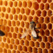 Yellow beautiful honeycomb with honey and bee, background - Zdjęcie stockowe