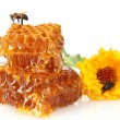 Sweet honeycomb with honey, bee and flower, isolated on white — Stock Photo #12712055