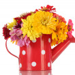 Bouquet of beautiful summer flowers in watering can, isolated on white — Stock Photo