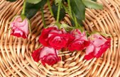 Beautiful vinous roses on wicker mat close-up — Stock Photo