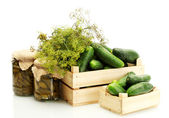 Fresh cucumbers in wooden boxes, pickles and dill isolated on white — Stock Photo