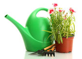 Watering can, tools and plant in flowerpot isolated on white — Stock Photo