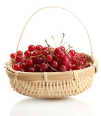 Redcurrants in a basket isolated on white — Stock Photo