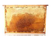 рамка желтые красивые соты с медом, изолированные на белом — Стоковое фото