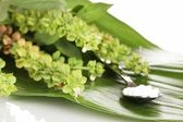 Homeopathic tablets and flowers on green leaf isolated on white — Stock Photo