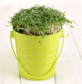 Fresh garden cress on pail on wooden table — Stock Photo