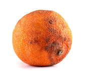 Rotten orange isolated on white — Stock Photo
