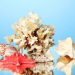 Sea coral with shells on blue background close-up - Stock Photo