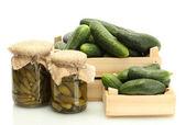 Verse komkommer in vakken en augurken geïsoleerd op wit — Stockfoto