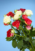 Bouquet of beautiful roses on blue background close-up — Stock Photo