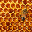 Yellow beautiful honeycomb with honey and bee, background — Stock Photo #12765770