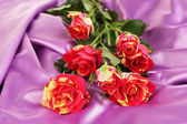 Beautiful red-yellow roses on purple satin close-up — Foto de Stock