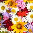 Beautiful bouquet of bright wildflowers, close up — Stock Photo
