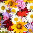 Beautiful bouquet of bright wildflowers, close up — Stock Photo #12778499