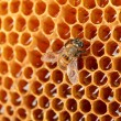 Yellow beautiful honeycomb with honey and bee, background - Stok fotoğraf