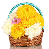 Beautiful chrysanthemum in basket isolated on white — Stock Photo