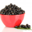 Fresh black currant in red bowl isolated on white - Stockfoto