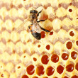 Yellow beautiful honeycomb with honey and bee, background - Foto Stock