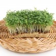 Stock Photo: Fresh garden cress on wicker cradle isolated on white