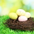 Colorful easter eggs on grass — Stock Photo #12859781