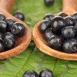 Tasty blueberries in wooden spoons on fern close-up — Stockfoto
