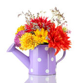 Purple watering can with white polka-dot with flowers isolated on white — Stock Photo