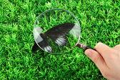 Fjäril och förstoringsglas i hand på grönt gräs — Stockfoto