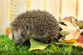 Hedgehog on autumn leaves, on wooden background — Stock Photo