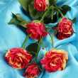 Beautiful red-yellow roses on blue satin close-up — Stock Photo