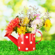 Red watering cwith white polka-dot with flowers on green background — Stock Photo #12889168