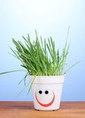 A pot of grass on blue background — Stock Photo