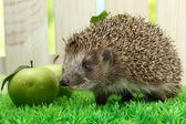 Hedgehog with leaf and apples, on grass, on fence background — Stock Photo