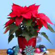 Beautiful poinsettia with christmas balls on wooden table on blue backgroun — ストック写真