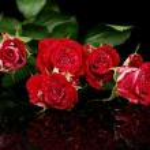Постер, плакат: Beautiful vinous roses on black background close up
