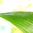 Beautiful green leaf with drops of water on green background close-up — Stock Photo