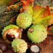 Chestnuts with autumn dried leaves and bark, on wooden background - Stock Photo
