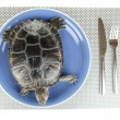 Red ear turtle on plate isolated on white - Stock Photo