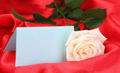 Beautiful rose on red cloth — Stock Photo