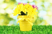 Beautiful bouquet of chrysanthemums in a bright colorful bucket on green b — Stock Photo