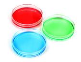Liquido di colore in piastre di petri isolato su bianco — Foto Stock