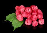 Fresh raspberries isolated on black — Stock Photo