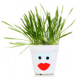 Stock Photo: A pot of grass isolated on white