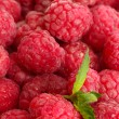 Ripe raspberries background with mint - Stock Photo