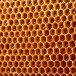 Yellow beautiful honeycomb with honey, background - 图库照片