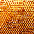 Yellow beautiful honeycomb with honey, background - ストック写真