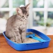 Small gray kitten in blue plastic litter cat on wooden table on window back - Stockfoto