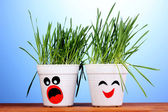 A pots of grass on blue background — Stock Photo